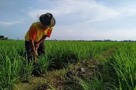 Ilegal logging di berhentikan Tani ajak kerjasama dengan dinas pertanian