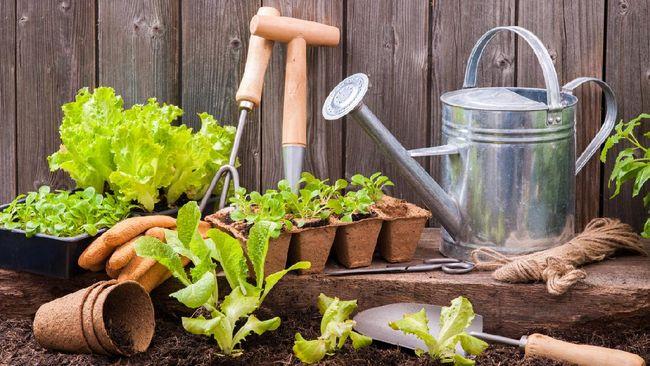 Perlengkapan Berkebun - Perlengkapan Berkebun yang Wajib Kamu Punya