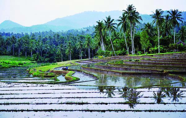 Kebijakan Terhubung dengan Pertanian dan Kehutanan