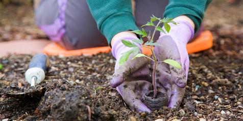 Manfaat Hebat dari Berkebun