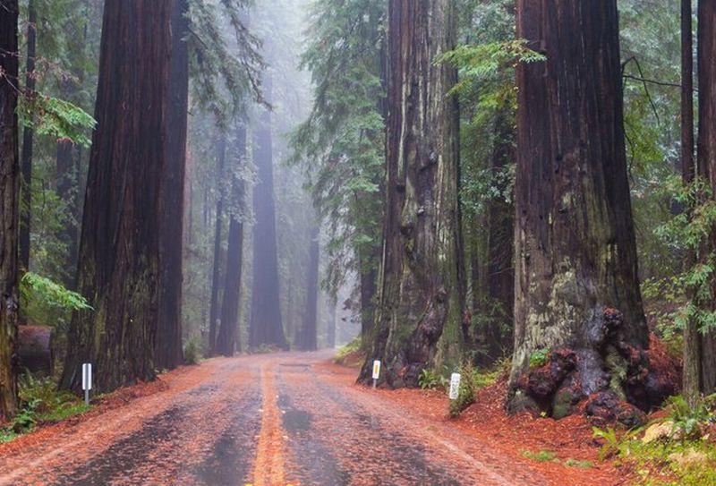 Beberapa Hutan Paling Indah di Dunia
