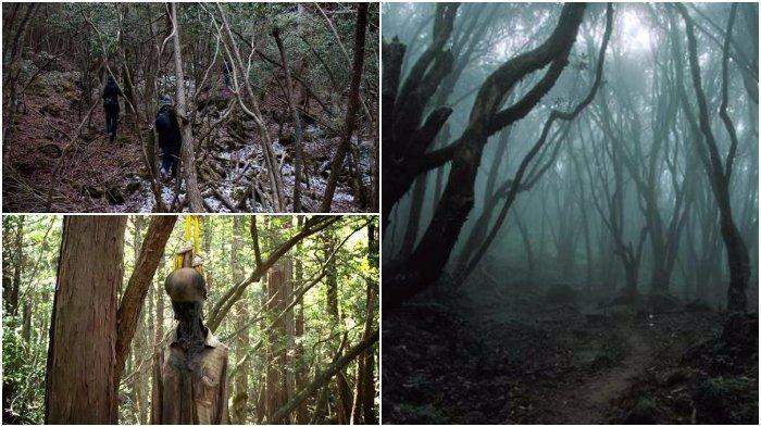 Hutan Paling Berbahaya di Dunia