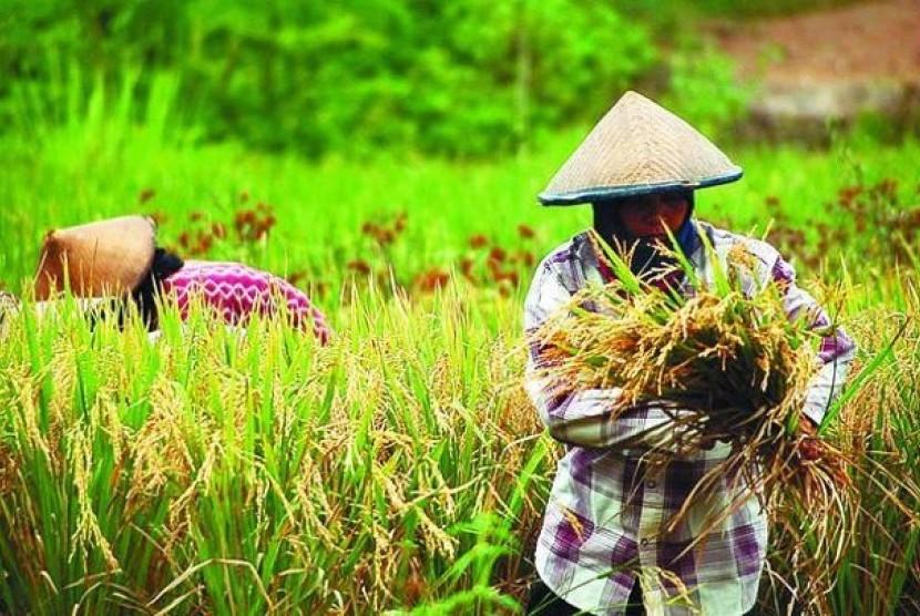 Ketahanan Pangan Nasional dan Sejahterakan Petani