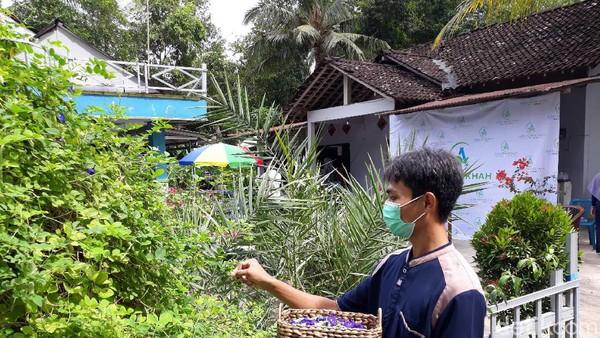 Usai Di PHK, Pria Ini 'Sulap' Bunga Telang Jadi Sabun hingga Teh